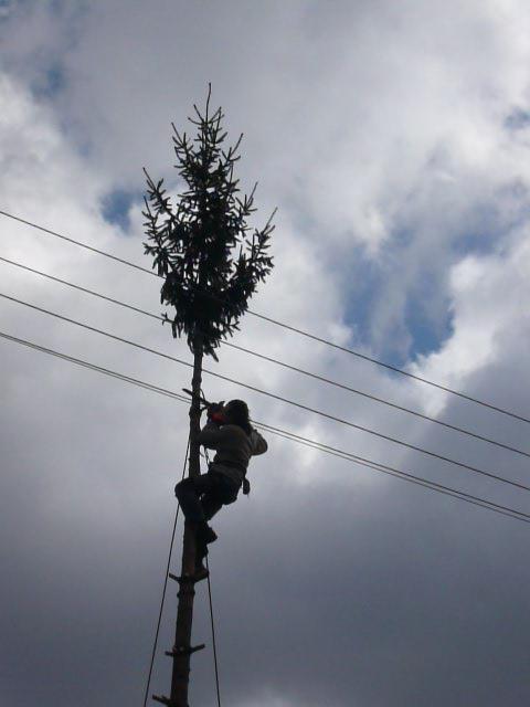 Postupné pílenie stromu